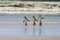 Paseo de tres pingüinos de rey en la arena mojada Imagen de archivo libre de regalías