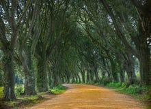 Paseo del árbol Imagen de archivo libre de regalías