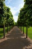 Paseo del árbol de cal imagen de archivo