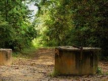 Paseo del bosque Fotos de archivo