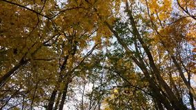 Paseo del bosque del otoño metrajes