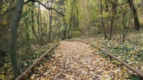 Paseo del bosque del otoño en parque metrajes
