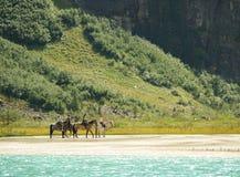 Paseo del caballo de la montaña Fotografía de archivo