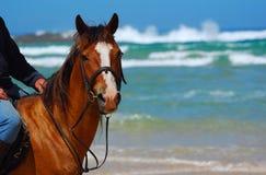 Paseo del caballo de la playa Imagenes de archivo