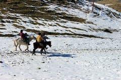 Paseo del caballo en el valle de la montaña de la naturaleza fotos de archivo libres de regalías