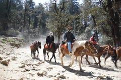 Paseo del caballo en Kufri Imagen de archivo libre de regalías