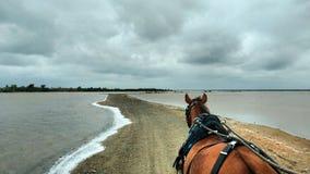Paseo del caballo y del carro en Cuba Foto de archivo