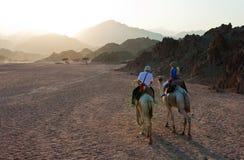 Paseo del camello Imágenes de archivo libres de regalías