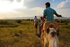 Paseo del camello Fotografía de archivo libre de regalías