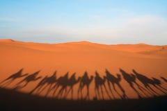 Paseo del camello del desierto imagen de archivo