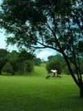 Paseo del campo de golf Foto de archivo libre de regalías