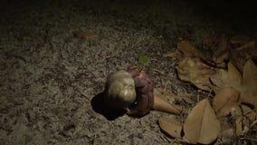 Paseo del cangrejo de ermitaño en Forest At Night Isla de Similan, Tailandia HD a cámara lenta almacen de video