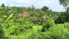 Paseo del canto de Campuhan, valle verde escénico en Ubud Bali, vídeo de la cantidad 4k almacen de metraje de vídeo