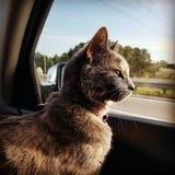 Paseo del coche de Kitty fotos de archivo