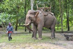 Paseo del elefante foto de archivo libre de regalías