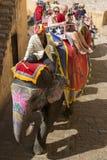 Paseo del elefante, turistas, viaje de la India, diversión de las vacaciones Foto de archivo