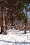 Paseo del invierno imagen de archivo libre de regalías