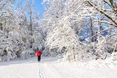 Paseo del invierno Nevado fotografía de archivo