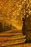 Paseo del otoño Imagenes de archivo