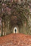 Paseo del otoño Imagen de archivo
