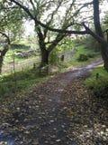 Paseo del otoño Foto de archivo
