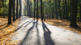Paseo del otoño de la naturaleza La gente que camina en otoño parquea los pies felices de la familia del bosque que caminan en la almacen de metraje de vídeo