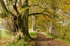 Paseo del otoño en Allen Banks Fotografía de archivo