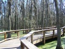 Paseo del pantano del pantano Imágenes de archivo libres de regalías