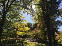 Paseo del parque imagen de archivo