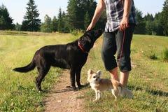 Paseo del perro Fotografía de archivo libre de regalías
