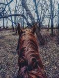 Paseo del rastro del caballo imágenes de archivo libres de regalías