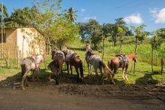 Paseo del rastro a través de la República Dominicana foto de archivo