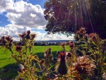 Paseo del tiempo de verano Imagenes de archivo