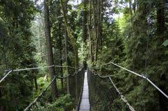 Paseo del toldo del jardín botánico de UBC Fotos de archivo