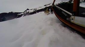 Paseo del trineo del perro en trineo largo en el glaciar de Alaska