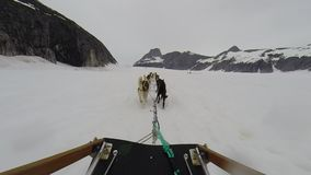 Paseo del trineo del perro en trineo largo en el glaciar de Alaska almacen de metraje de vídeo