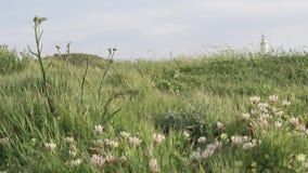 Paseo el la primavera Chipre Porciones de verdor, flores almacen de metraje de vídeo
