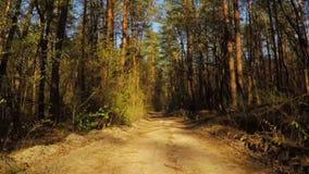 Paseo en el camino forestal de la primavera almacen de metraje de vídeo