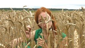 Paseo en el campo de trigo almacen de metraje de vídeo