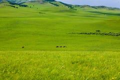 Paseo en el prado amplio Foto de archivo libre de regalías