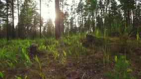 Paseo en la cantidad del movimiento del forestSlow del verano tiro del steadicam Visión animal almacen de metraje de vídeo