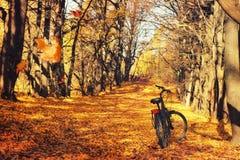 Paseo en una bicicleta en el bosque del otoño foto de archivo libre de regalías