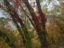 Paseo escénico de la caída en el parque imagen de archivo