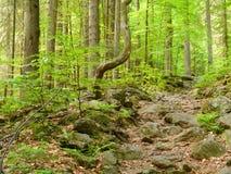 Paseo a la cascada Höllbachgspreng, macizo enselvado de la roca foto de archivo libre de regalías