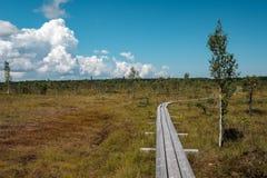 paseo marítimo de madera del sendero en el área del pantano del pantano Fotos de archivo libres de regalías