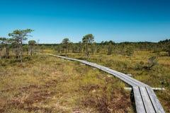 paseo marítimo de madera del sendero en el área del pantano del pantano Fotos de archivo