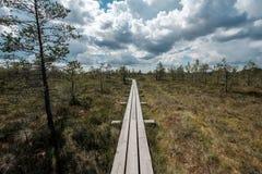 paseo marítimo de madera del sendero en el área del pantano del pantano Imagen de archivo libre de regalías