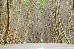 Paseo marítimo del bosque del mangle Foto de archivo libre de regalías