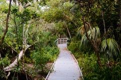 Paseo marítimo en el bosque del mangle Fotografía de archivo libre de regalías