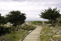 Paseo marítimo entre los árboles de ciprés de Monterey Foto de archivo libre de regalías